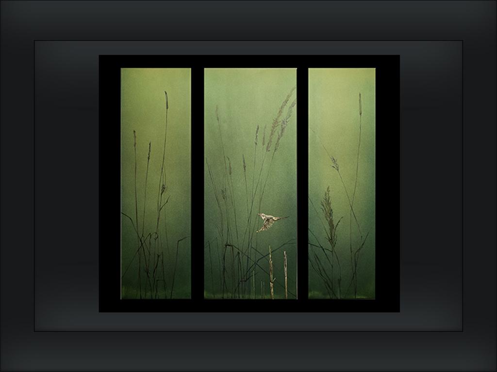 4 Irij tryptyk akyl itusz akrylowy napłótnie lato IX 201430 x100, 40 x 100, 30 x 100 cm..